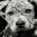 A Voice Against The Cruelty To Helpless Animals, The Daily Horrifying Experiences